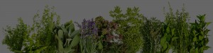 Background Image Herbs